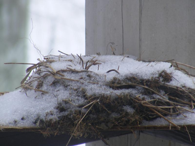winters nest by rebecca smith