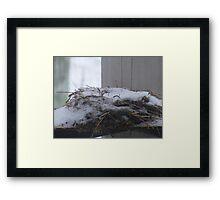 winters nest Framed Print