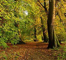Autumn Avenue by Michael Stubbs