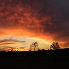 Outback Sunset by JulieMahony