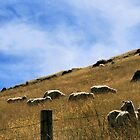 Sheep Fence by kaneko