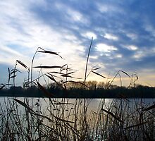 Winter Rushes by Chris  Munday