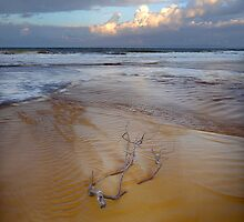 Tidal Debris by Barbara Burkhardt