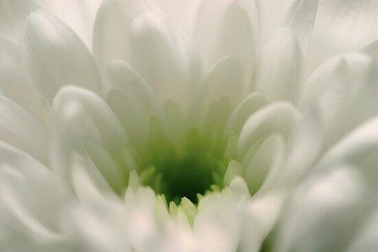 Bloom Dreams by Paul Morley