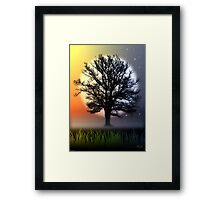THE OAK TREE Framed Print