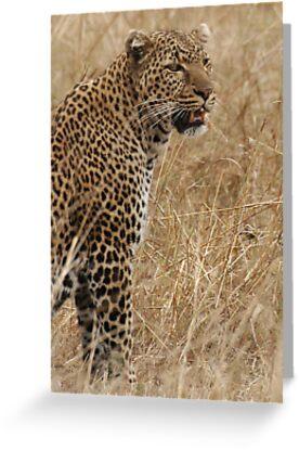 Leopard by Steve Bulford
