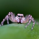 Big eyes! by Ben Shaw