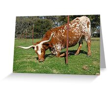 The grass is always greener on the other side of the fence . . .  Greeting Card