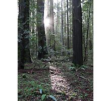 redwood dawn Photographic Print