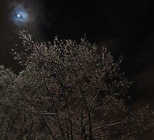 Moonlit Tree by evaahn