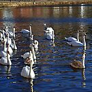 Swanee River.............. by lynn carter