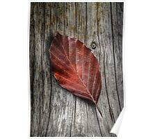 Autumn Leaf On Wooden Background Poster