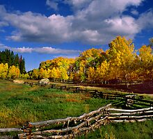 Colorado Fall by Steve  Taylor