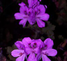 Purple Palagonia by Retrograde Designs