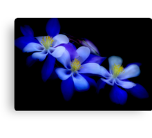columbines Canvas Print