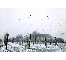 weather for Hitchcock? Photographic Print