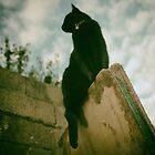 Black cat by Louise LeGresley
