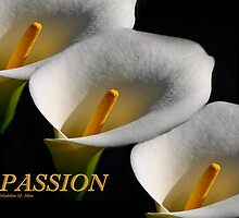 PASSION by Madeline M  Allen