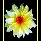 YELLOW DAHLIA by Madeline M  Allen