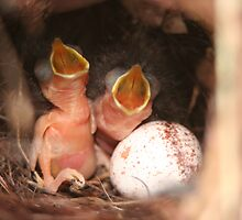 Just Hatched by Jennifer Lee Johnson