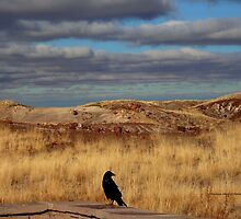 Raven at the Petrified Forest by Charmiene Maxwell-batten
