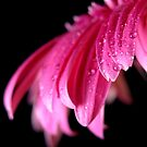 Pink Droplets by Luis Correia