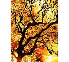 Serene By Sunart Photographic Print