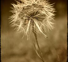 Backyard Treasures III: Dandelion Dream by Martie Venter