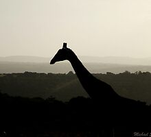 Giraffe Silhouette by LifeByTheDrop
