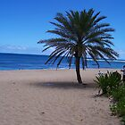 Palm Tree In Hawaii by 1greenthumb