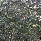 First Robin of 2008 by brucemlong
