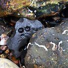 It's In The Stones........... by lynn carter