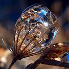 DIAMOND IN THE ROUGH by clou2