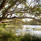 Dunkeld Community Park, Dunkeld, Victoria by Elana Bailey