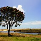Pohutukawa Tree, Spirits bay, New Zealand by Victoria Ashman
