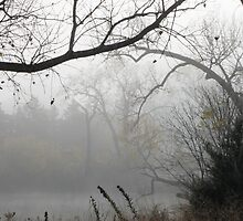 Scenes of Fall Mist by Todd Androy