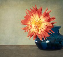Orange Dahlia by Colleen Farrell