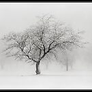 The Sound of Snow by mymamiya