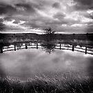 Dewpond by Tom Black