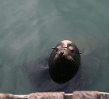 Where's my fish? by JANICE SCHULZ