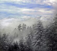 Winter Evergreens by Todd Androy