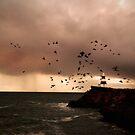 fight or flight by Dan Coates
