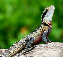 Eastern water dragon by Dean Jewell