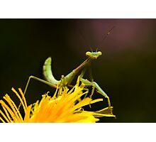 Green on Yellow Photographic Print