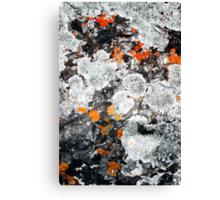 Orange and Grey Lichen #1 Canvas Print