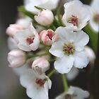 White and Pink Flowers by Vonnie Murfin