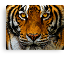Intense Gaze Canvas Print