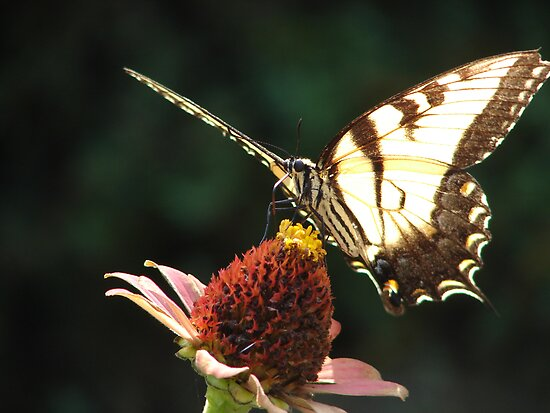 Neighborhood Butterfly by inventor