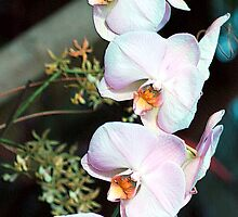 Cascade Of Orchids by Kathleen Struckle