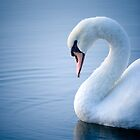 Swan by doorfrontphotos